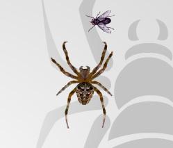örümcek ile sinekleri yakalama